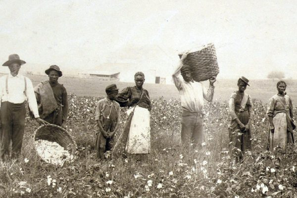 African American men, women, and children, employed as cotton pickers